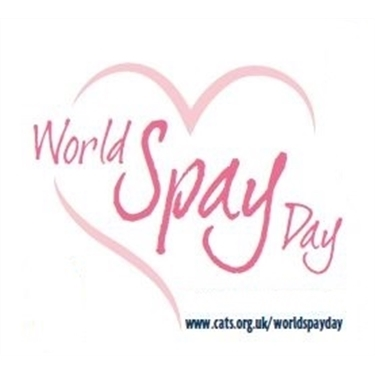 Get your cat neutered or spayed for only £5 this World Spay Day!