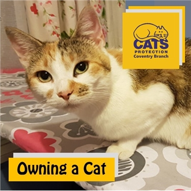Cat Care: Owning a Cat