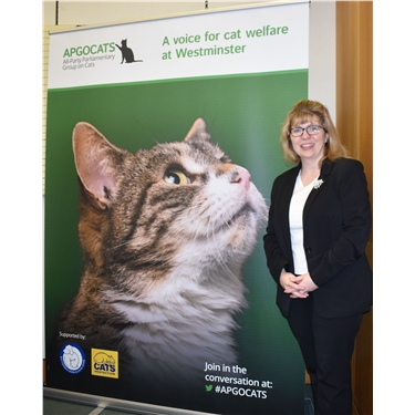 New All-Party Parliamentary Group puts cat welfare on the political agenda
