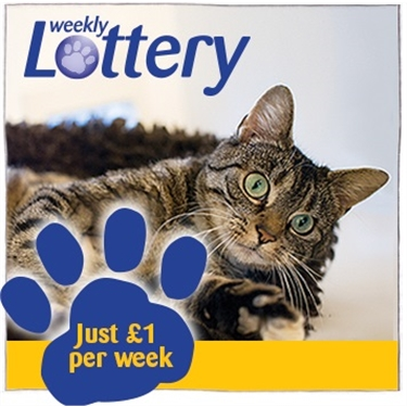 Cats Protection Weekly Lottery
