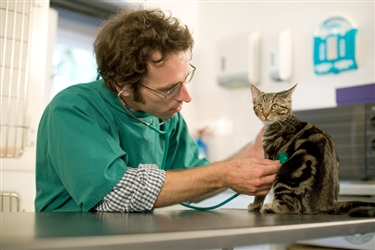 Help with cat neutering costs for local residents