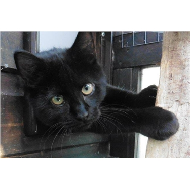 National Black Cat Day 27 October 2015