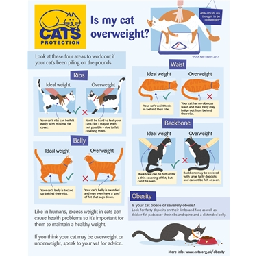 Is your cat Obese?