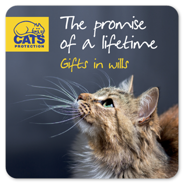 Leaving a gift to Cats Protection in your Will
