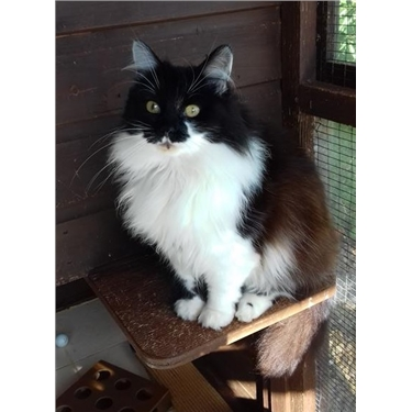 Featured Cat of the Week - Athena