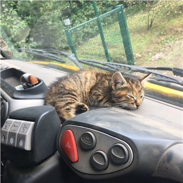 Kitten abandoned at landfill site gets a happy home with driver