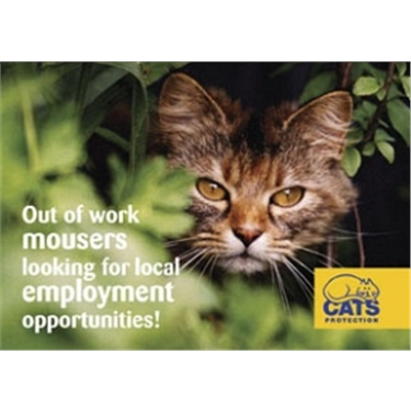 Out of work mousers looking for semi-rural employment opportunities