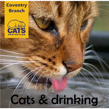 Cat Care:Cats & Drinking