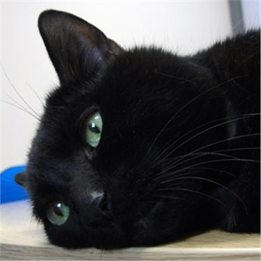 Overlooked cat seeks purr-fect Valentine