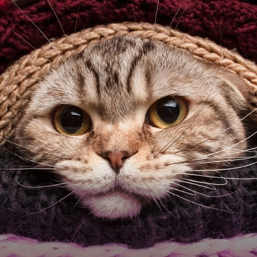 Get knitting for the Spring Knitting and Stitching Show and help unwanted cats in Cats Protection's care