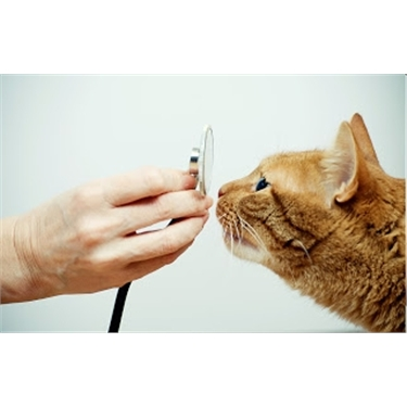 Fram & Sax News and Cat Care