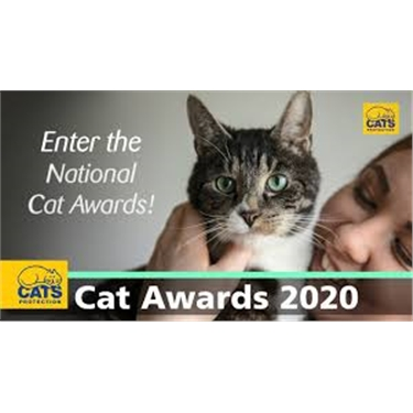 National Cat Awards 2020