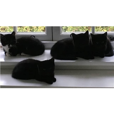 Black Cat Collection - appeal