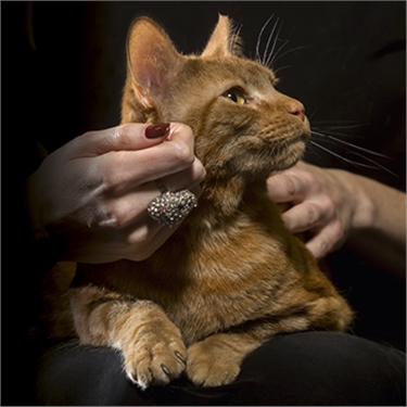 Time is running out to nominate your cat for the National Cat Awards
