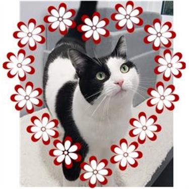 Valentine Kitty - Poppy!