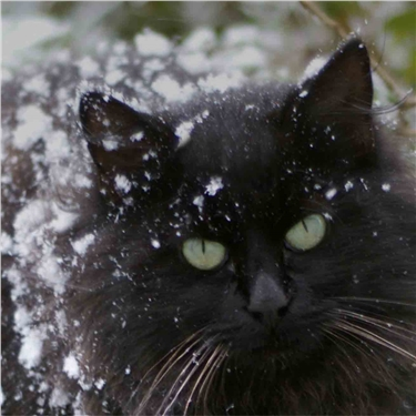 How to protect cats from the beast in the East