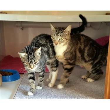 Cassie and Suki go to their new home