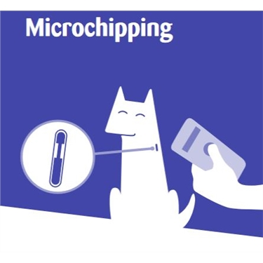 Please microchip your cat - this will explain why