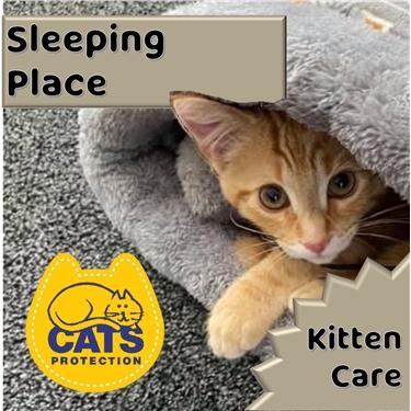 Kitten Care: Sleeping Place