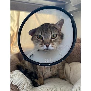 Meet Tess our sponsor cat