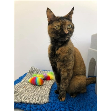 Kitty of the Week - Rainbow!