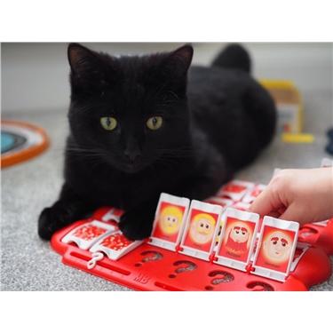 Cats Protection Mental Health Awareness Week