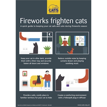 Keeping your cat safe during fireworks season