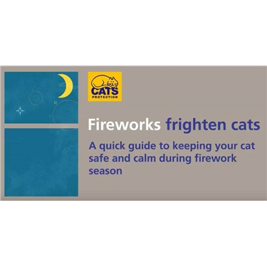 New animation helps to calm cats during Fireworks Night