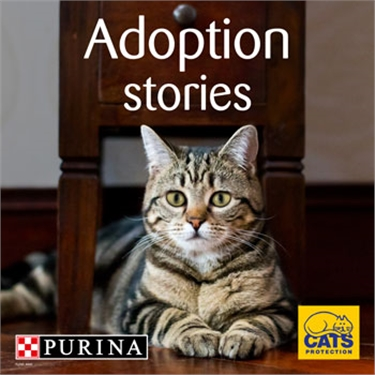 Cat adoption campaign: PURINA and Cats Protection collaboration