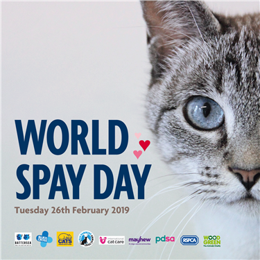 World Spay Day - Free Neutering