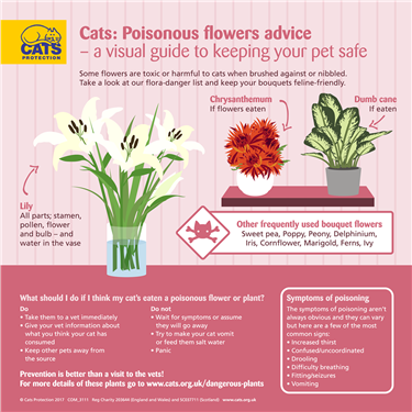 Cat friendly flowers