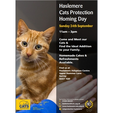 Homing Day at Haslemere Centre on Sunday 24th of September