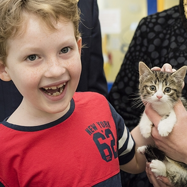 Young boy's act of kindness helps unwanted cats