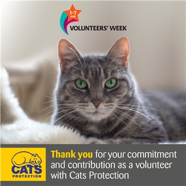 National Volunteer Week: Celebrating our fabulous volunteers