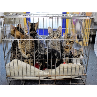 Sixteen cats and kittens found crammed into cage recovering with Cats Protection