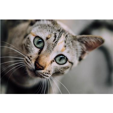 Videos: Busting cat behaviour myths