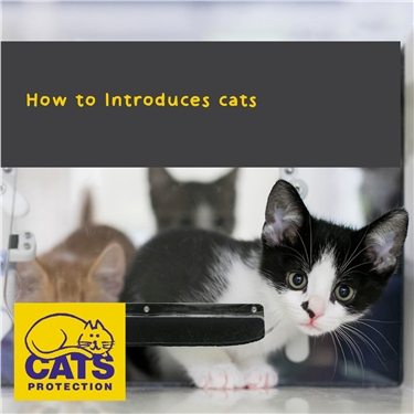 How to Introduces cats