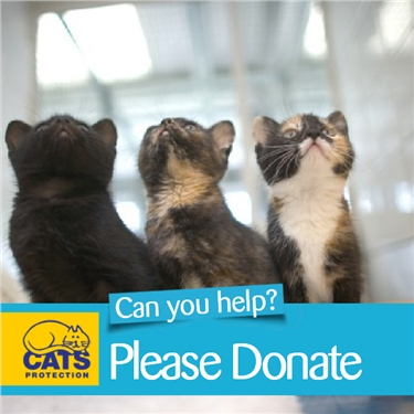 Salisbury & District Cats Protection needs your help