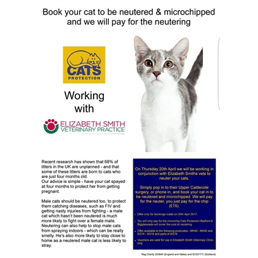 Neuter Your Cat for Free