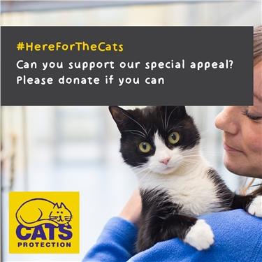 Coronavirus Appeal #HereForTheCats