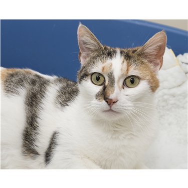 New Sponsor Cat Daisy is the Star of our Kitten Watch Blog!