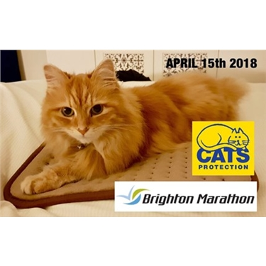 Eastbourne runner for Brighton Marathon