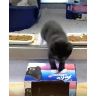 Kittens Socialisation: Live @ Lunch 1