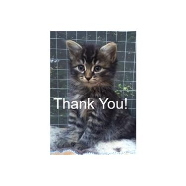 Asda - Thank You