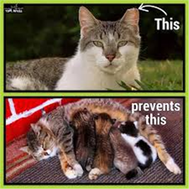 Farm and feral cats - help available