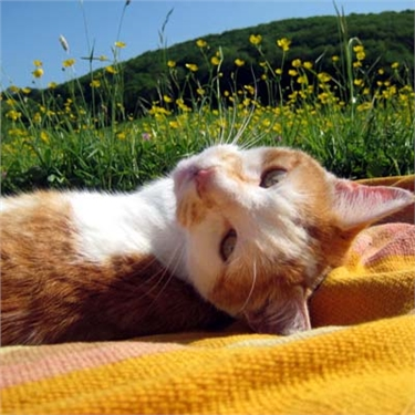 Please protect your cat from sun damage