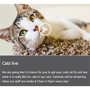 CatCam Goes Live!
