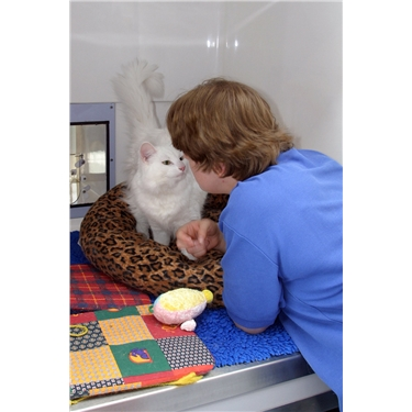 (FIV) Feline Immunodeficiency Virus