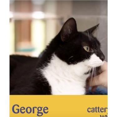 Meet George - video