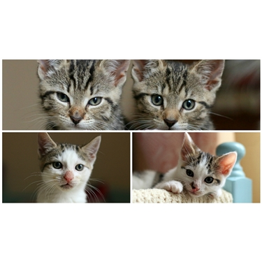 Happy Birthday to four special kittens!